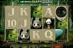untamed giant panda microgaming pokie