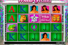 white orchid igt pokie